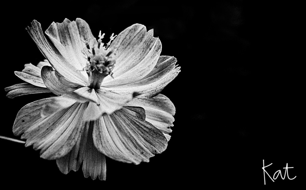 flower2w
